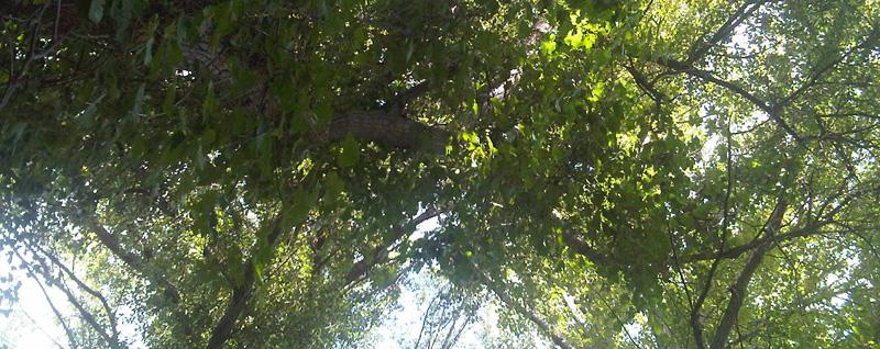 La vid trepadora: belleza a 14 metros de altura