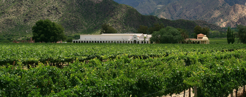 Vinos Chilenos : 500 años de experiencia