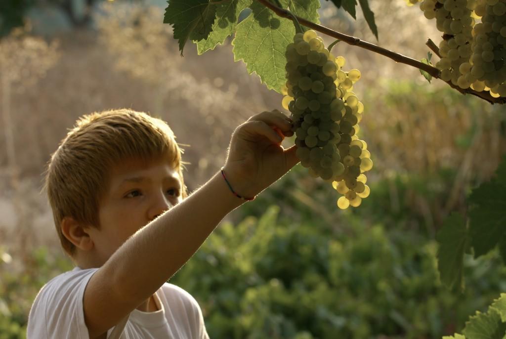 La viticultura sostenible de Familia Martínez Bujanda (I)