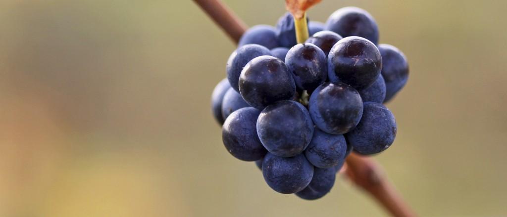 La viticultura sostenible de Familia Martínez Bujanda (II)