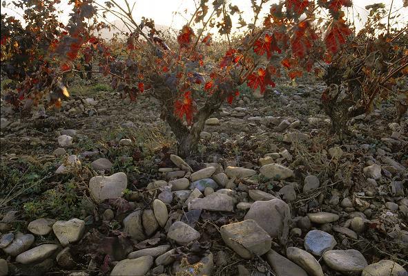 Finca Valpiedra: The spirit of Rioja Alta (II)