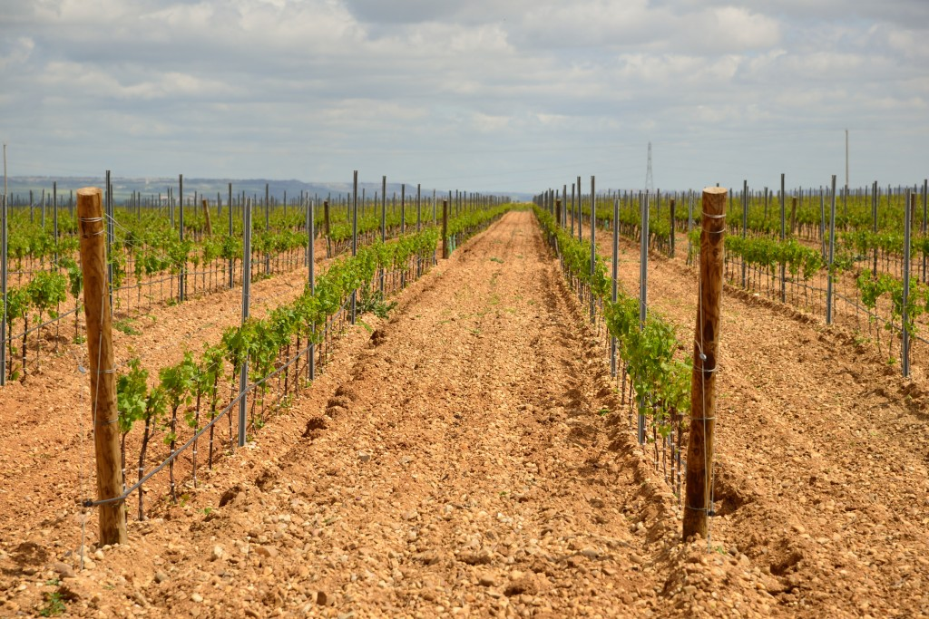 Finca Montepedroso: the 'terroir' of Rueda