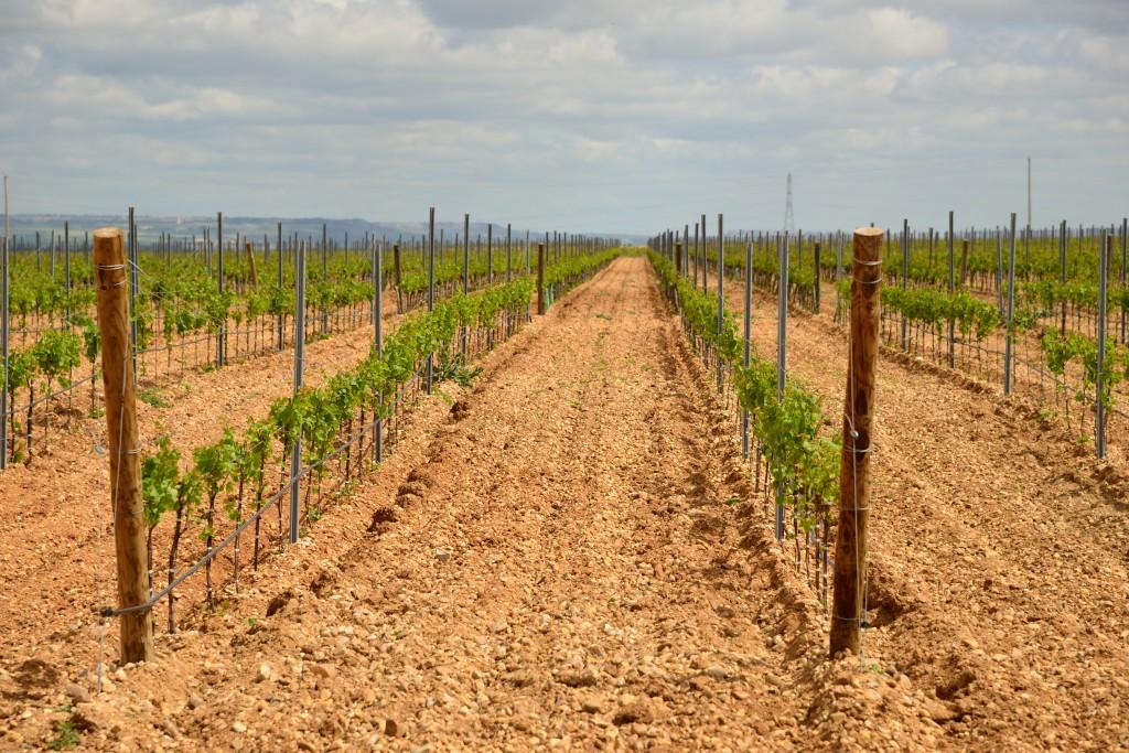 Finca Montepedroso: the 'terroir' of Rueda