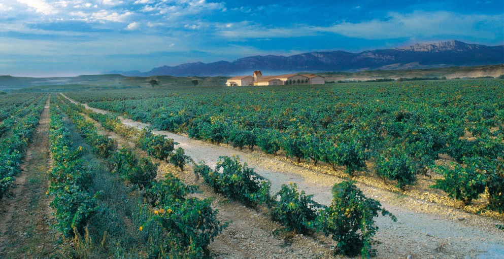 Terroir, terruño and climat: The theory