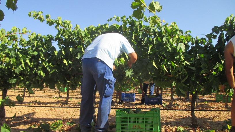As harvest season kicks off at Finca Antigua…we anticipate another great vintage!