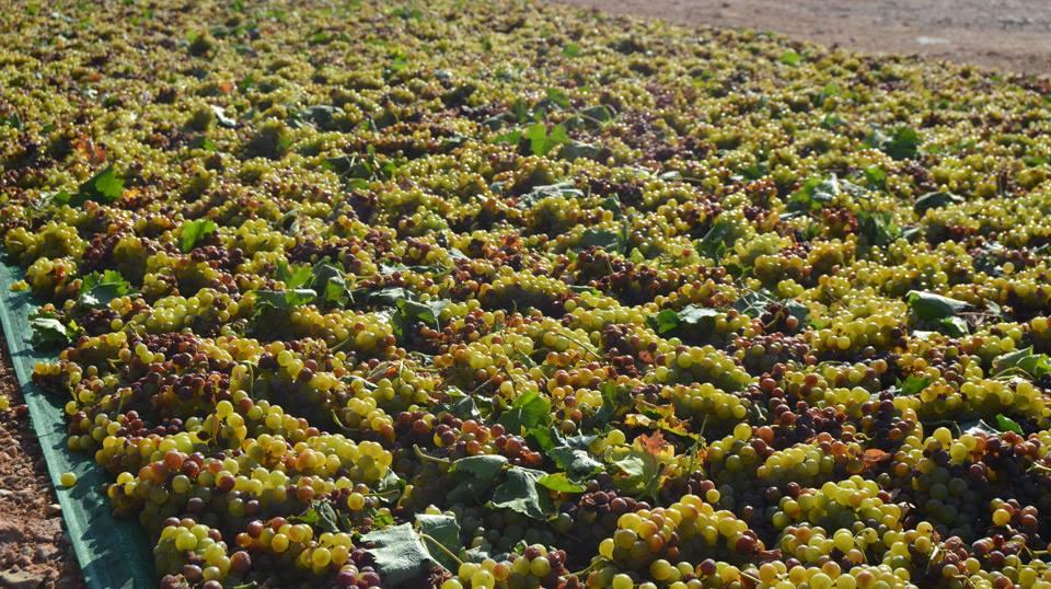 Menos, pero grandes vinos de Familia Martínez Bujanda en Rueda, Rioja y La Mancha