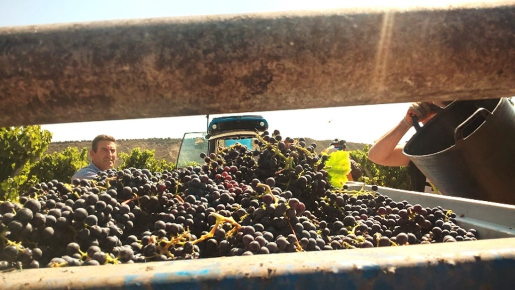 A sensational harvest for Finca Valpiedra in one of the toughest years for the region of Rioja