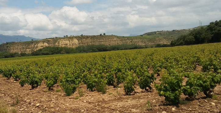 The terroir, or the influence of a unique environment on a wine's traits