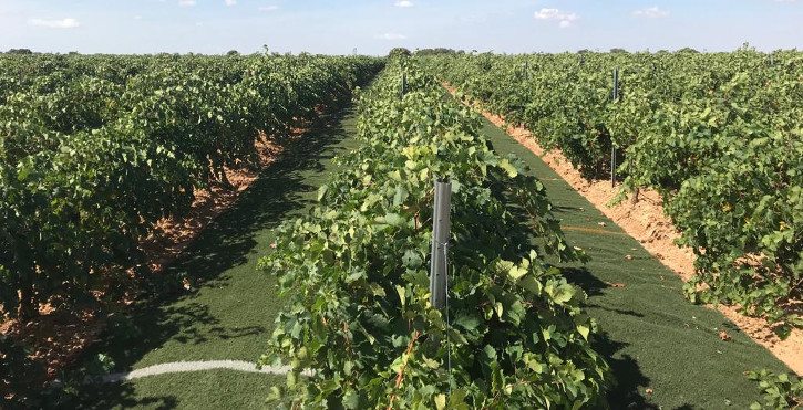 Finca Antigua uses artificial grass as innovative sustainable winemaking practice