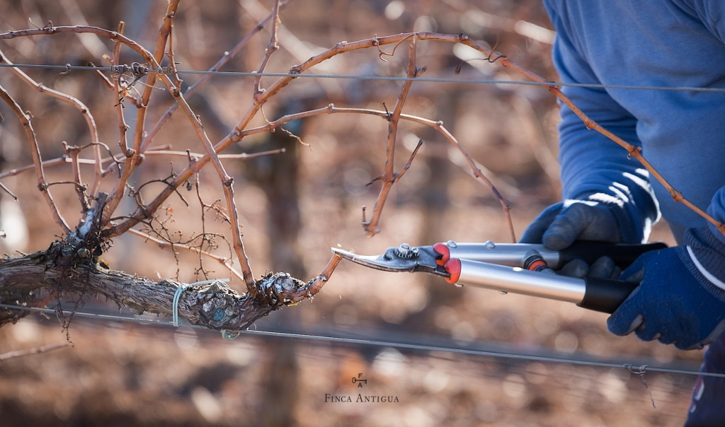 The Pruning Season: Determinant in the New Campaign